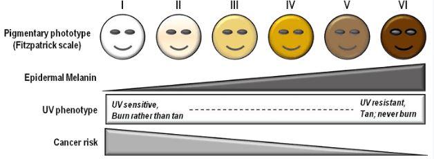Fitz skin tone scale, fitzpatrick scale, fitzpatrick skin tone scale